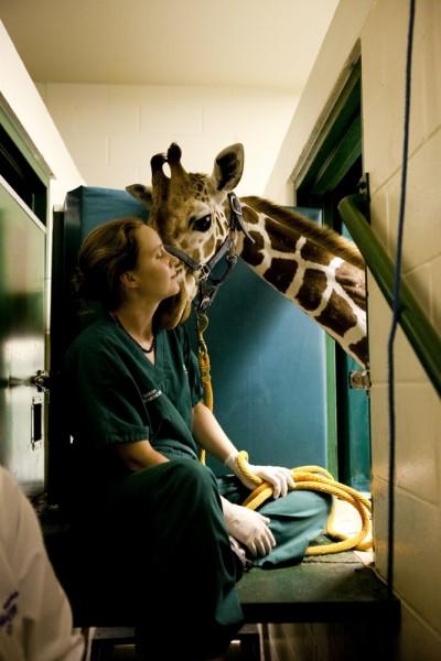 Giraffe_0602_Kiewel1