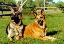 canine sports medicine 2