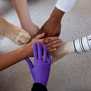 Emergency & Critical Care » Small Animal Hospital » College of ...